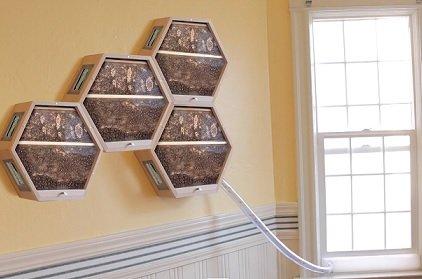 Американская компания предлагает клиентам домашние пчелиные фермы