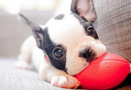 Выходец из Гарварда запустил стартап по омоложению домашних животных