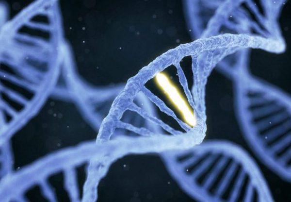 Недостаток генетических знаний может привести человечество к непоправимым ошибкам