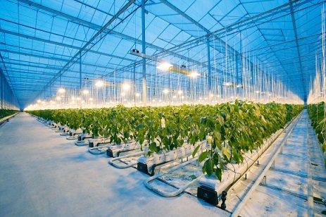 Microsoft, Intel и Tencent разработали ИИ-технологию выращивания огурцов