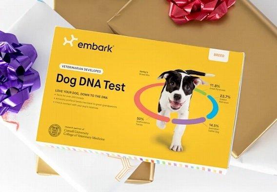 Оценка производителя собачьих ДНК-тестов Embark Veterinary достигла 700 млн USD